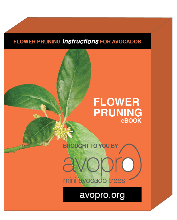 avopro avocado flower pruning